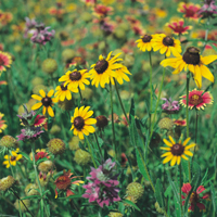 Category Native Seed Mi Habit Annual Perennial Bloom Mar Nov Height 6 36 Inches Planting Rates